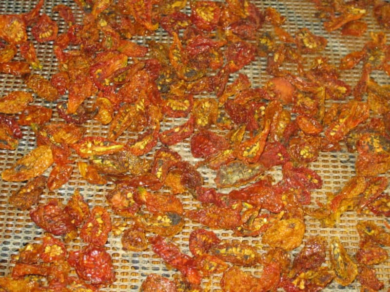 """sun-dried"" tomatoes on dehydrator tray"