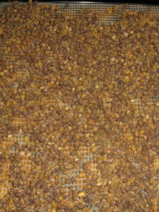 Soaked and Dried Mung Beans in Dehydrator