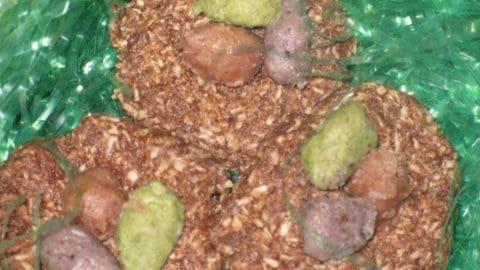 Chocolate / Carob Coconut Birds' Nests