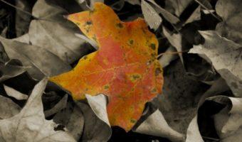 Giving Thanks Thanksgiving Aspergers