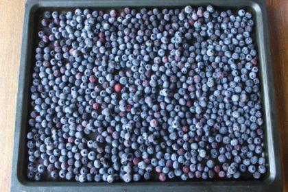 Freeze Berries