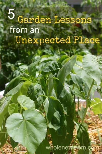 Working on a Garden is tough work. Come read 5 Great Tips that we got from an unexpected source. And see what we're doing to grow a flourishing vegetable garden!