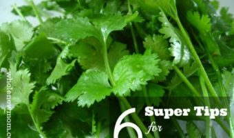 Cilantro - that fabulous Mexican Herb - How to Store it--and How to Use Cilantro-6 Super Tips! Betcha don't know all of these!