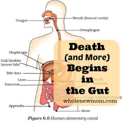 Death (and More) Begins in the Gut