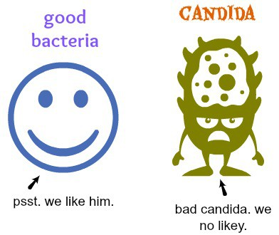 Candida - Good Bacteria vs Bad Candida. You need them in balance to have good gut health.