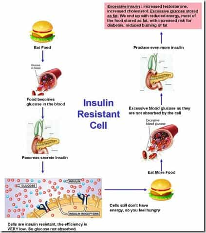 A diagram of insulin resistance