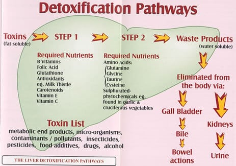 Detoxification Pathways infographic
