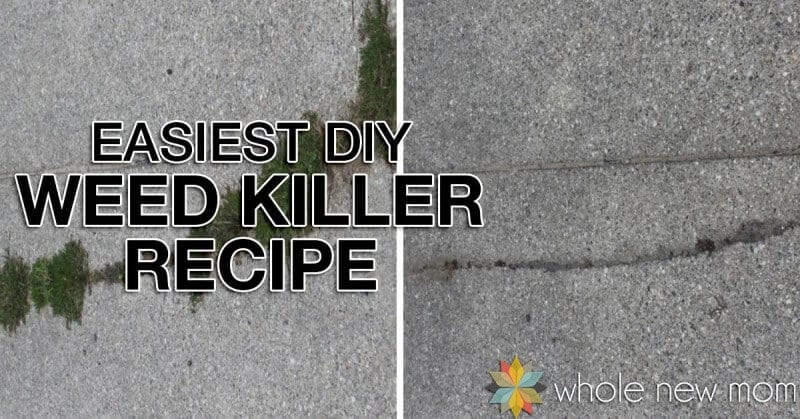 Find out how to make the Easiest and Cheapest Homemade Weed Killer and why this blogger almost screamed at her neighbor.