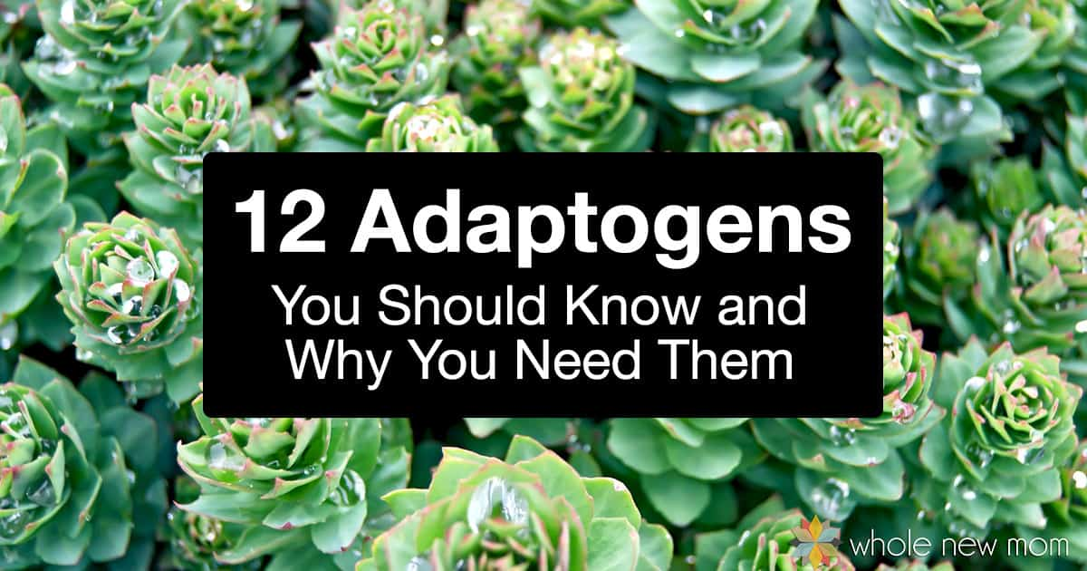 What are adaptogens? Adaptogens are the unsung heros of natural healing and living! Here's all you need to know on what adaptogens are and why you need these healers in your natural medicine cabinet. Plus 12 adaptogens to get started with!