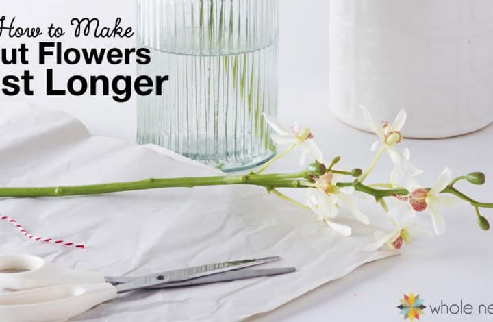 Being in nature is a great way to add to your emotional (and physical) health, and bringing a bit of the outdoors in (like in the form of cut flowers) can do plenty to boost your mood and make you feel healthier. Here's how to make cut flowers last longer, and bring a bit of nature inside to boost your spirits!