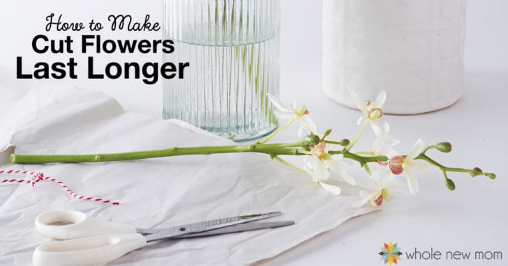 How to Make Flowers Last Longer (plus the best tip of all)