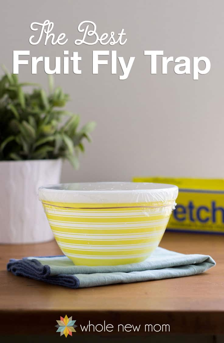 The Best DIY Fruit Fly Trap! Are Pesky Fruit Flies driving you batty? I tried out a bunch of traps, but this is the Best Fruit Fly Trap that I found! Tons of the buggers gone in no time!