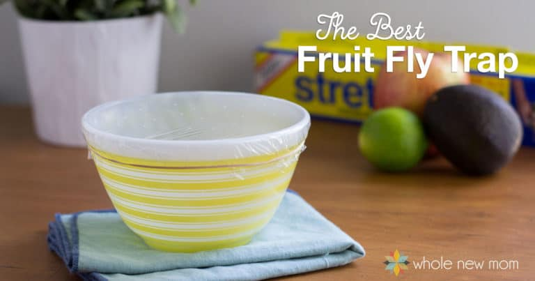 Are Pesky Fruit Flies driving you batty? I tried out a bunch of traps, but this is the Best Fruit Fly Trap that I found! Tons of the buggers gone in no time!