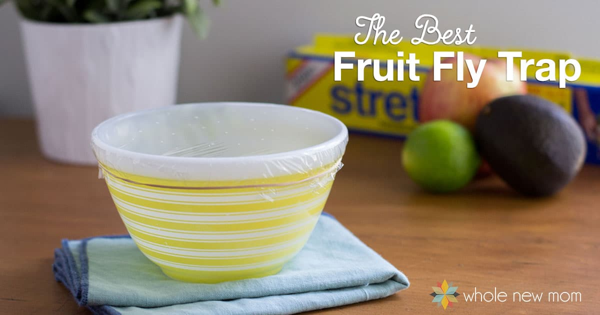 is eating just fruit healthy fruit fly trap