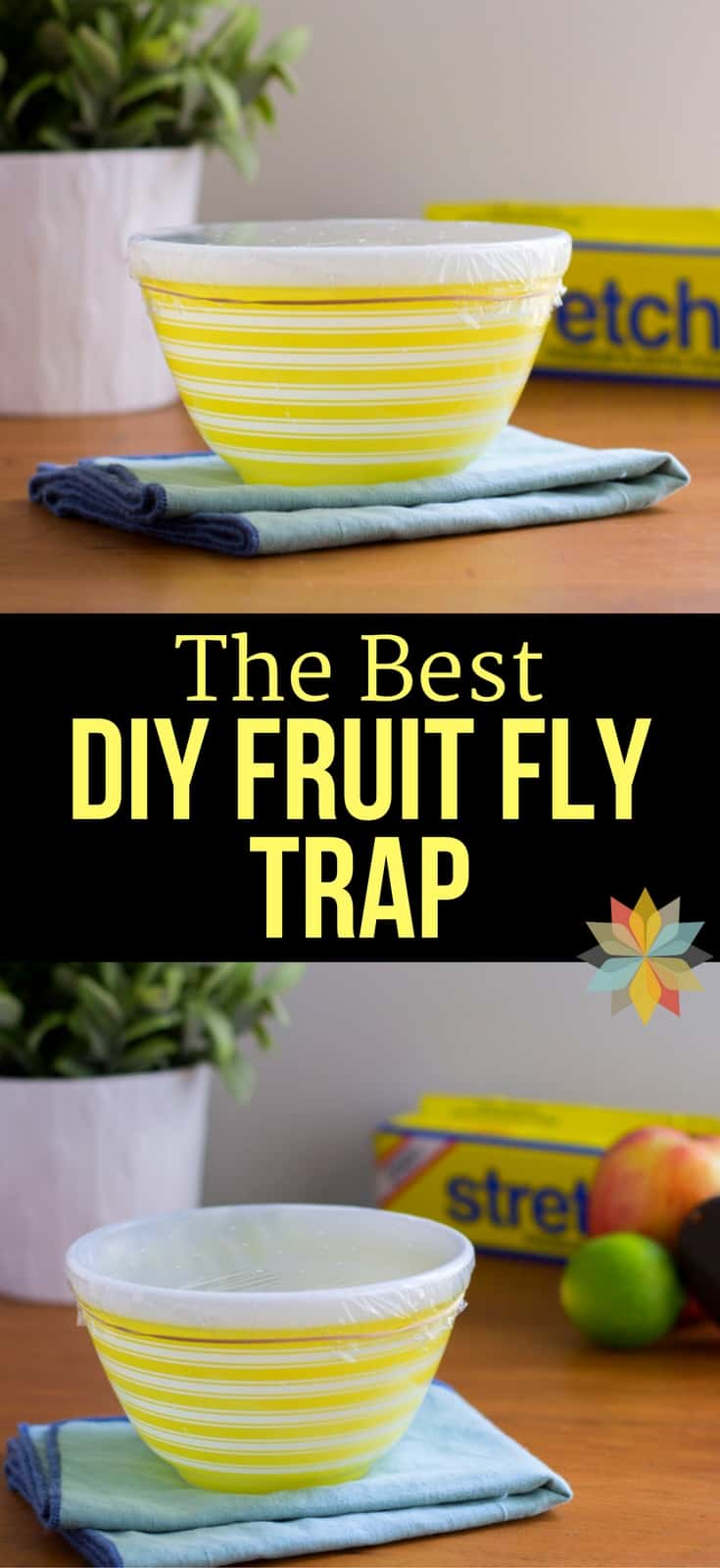 The Best DIY Fruit Fly Trap! Are Pesky Fruit Flies driving you batty? I tried out a bunch of traps, but this is the Best Fruit Fly Trap that I found!