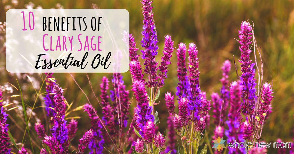 Clary Sage Essential Oil Benefits – Hormonal Balance, Insomnia & More
