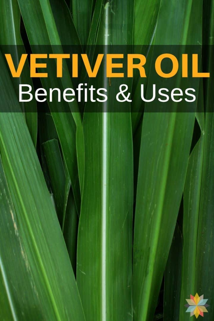Vetiver Essential Oil Benefits and Uses