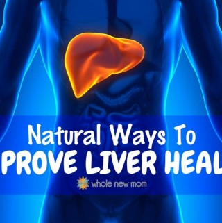 Liver highlighted in a body
