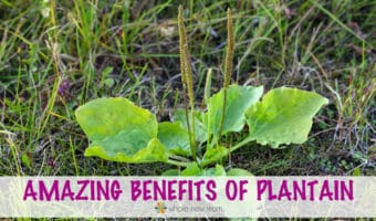 Plantain Benefits: Tap into the Amazing Power of Plants!