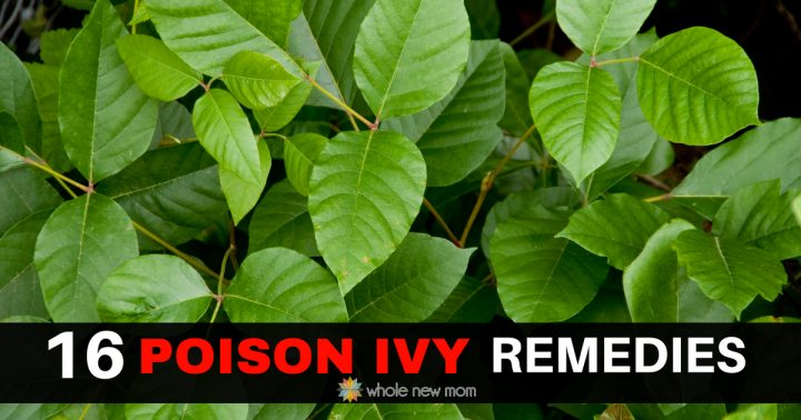 17 Home Remedies For Poison Ivy Rash Whole New Mom