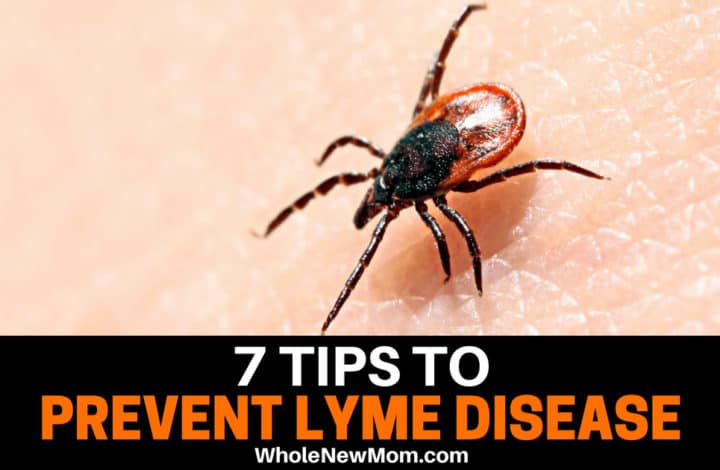 7 Tips to Prevent Lyme Disease