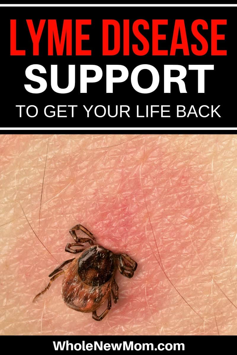 tick on skin--lyme disease support
