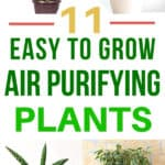 collage of air filtering plants including ficus, boston fern, peace lily, snake plant, and spider plant