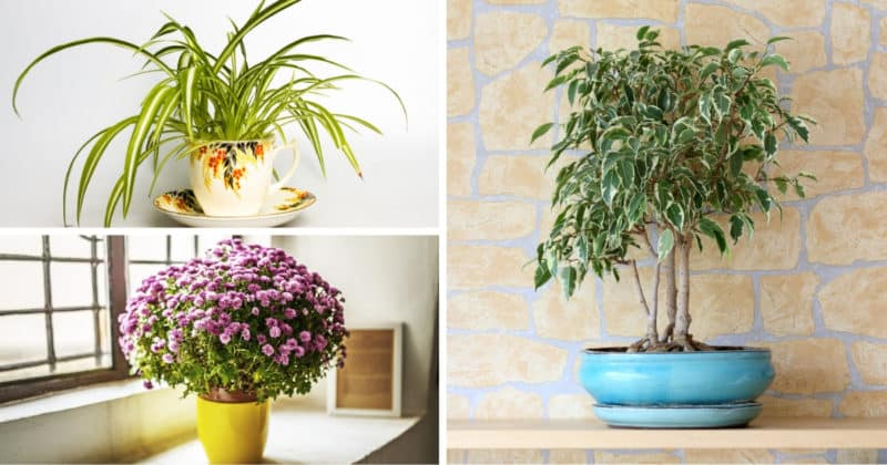 11 Best Easy To Grow Indoor Air Purifying Plants