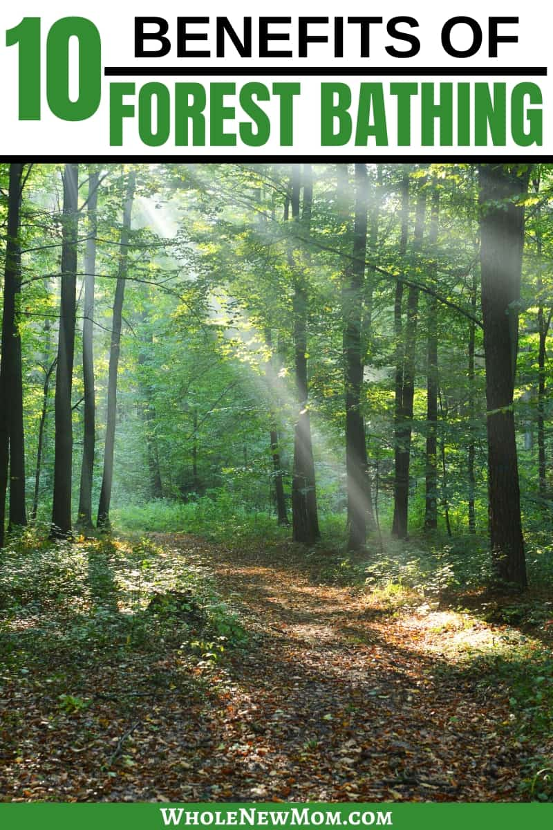 photo of forest for forest bathing benefits post