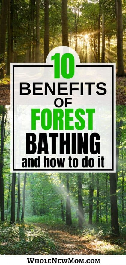 forest photo collage for forest bathing benefits post