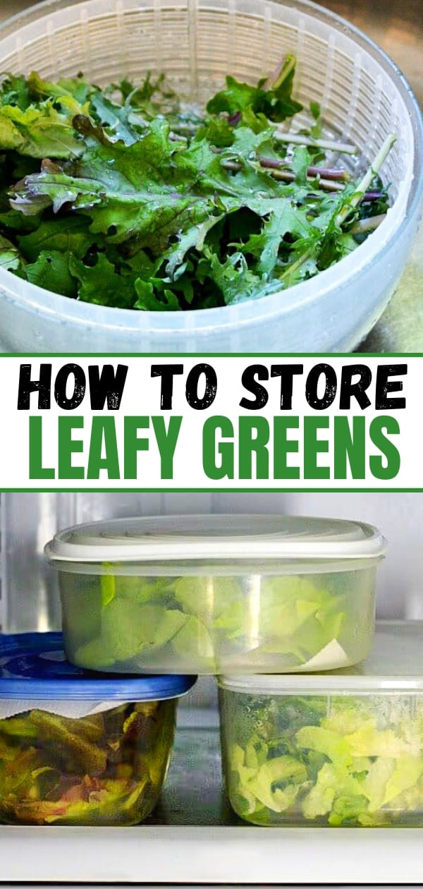 collage of lettuce in a colander and in plastic containers in a fridge for a post about how to store leafy greens