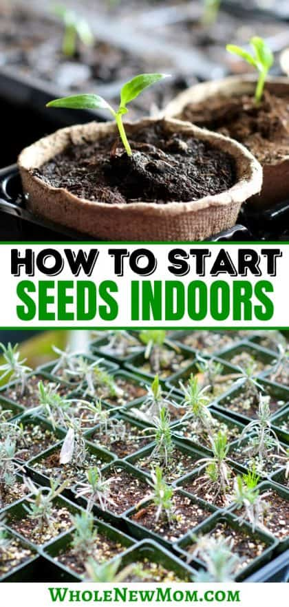 seedlings growing in pots and trays for how to start seeds indoors post