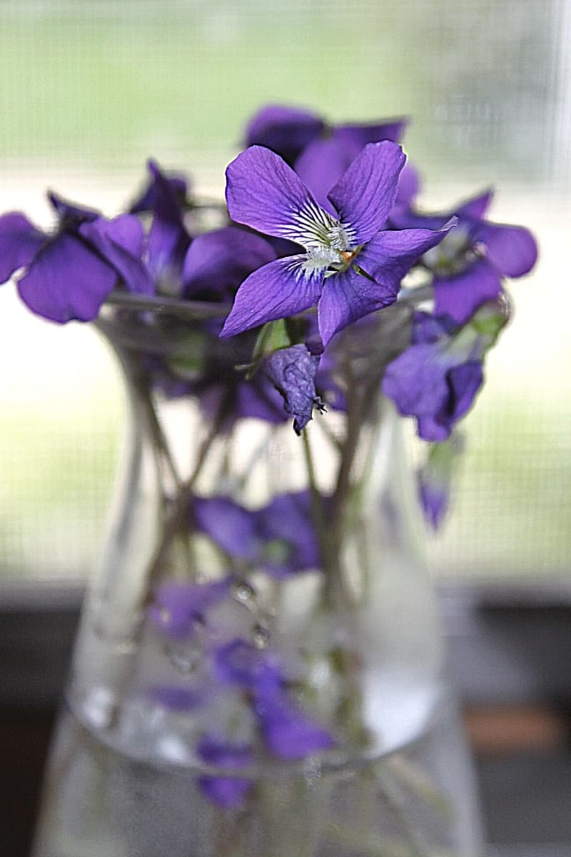 wild violets in a small glass vase