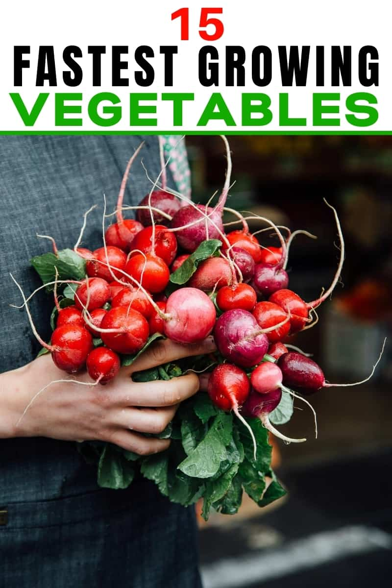 woman holding a bunch of radishes for fastest growing vegetables post