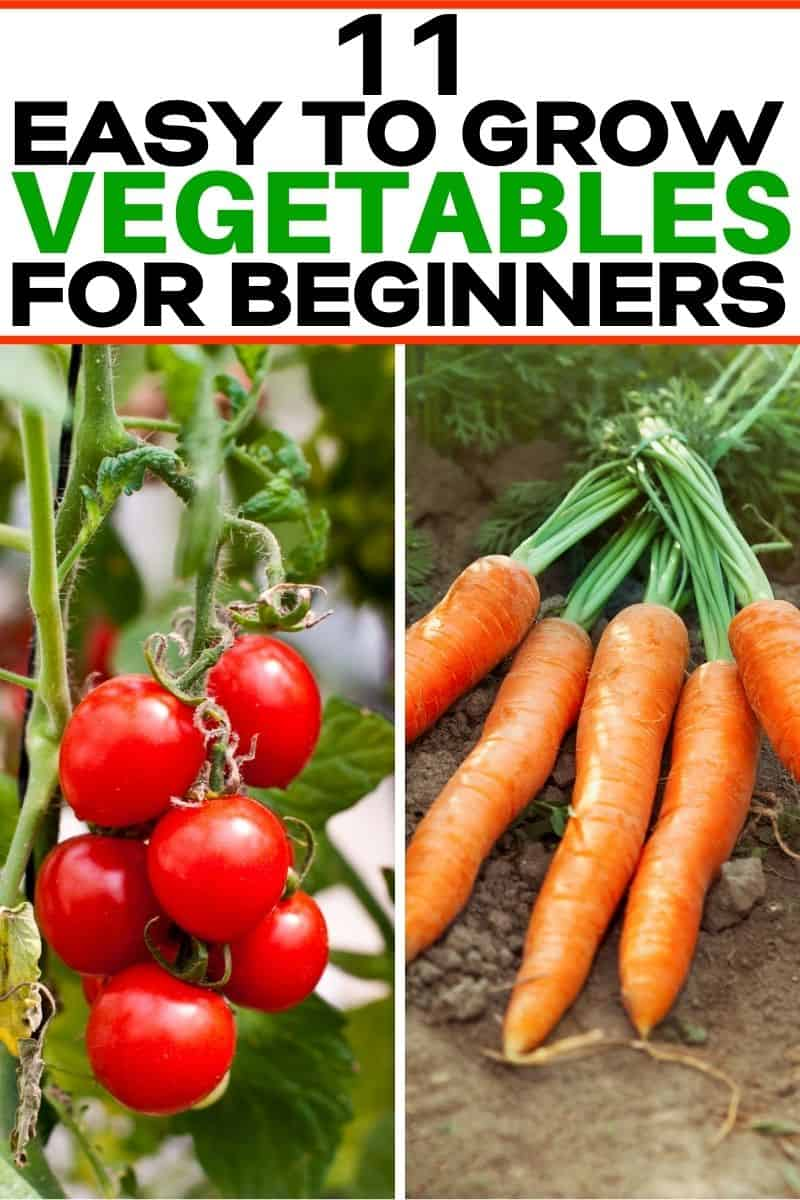 Pinterest collage of cherry tomatoes and carrots for easy to grow vegetables post