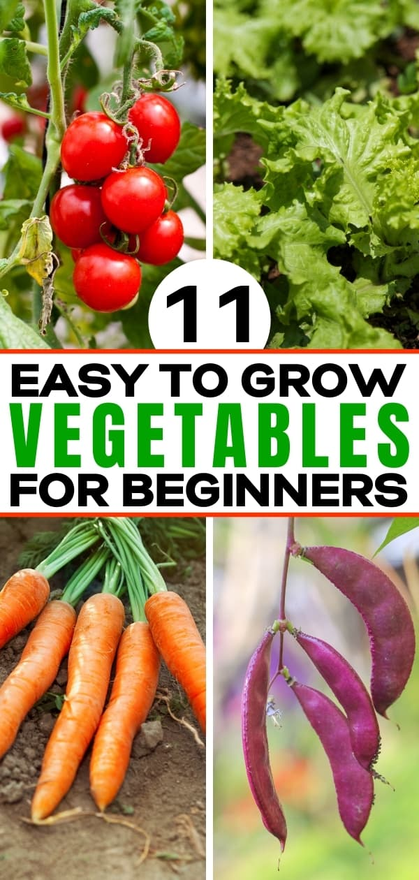 Pinterest collage for 11 Easy To Grow Vegetables For Beginners post