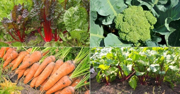collage of chard, beets, carrots, and broccoli