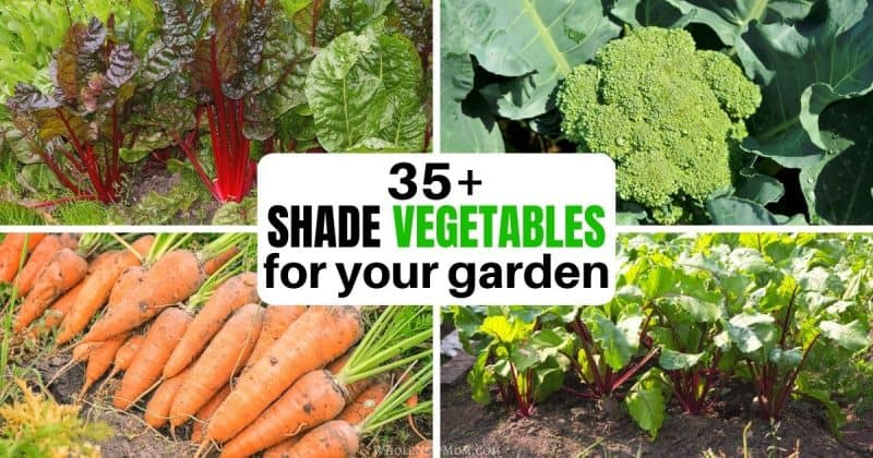 Collage of 35+ Shade Vegetables