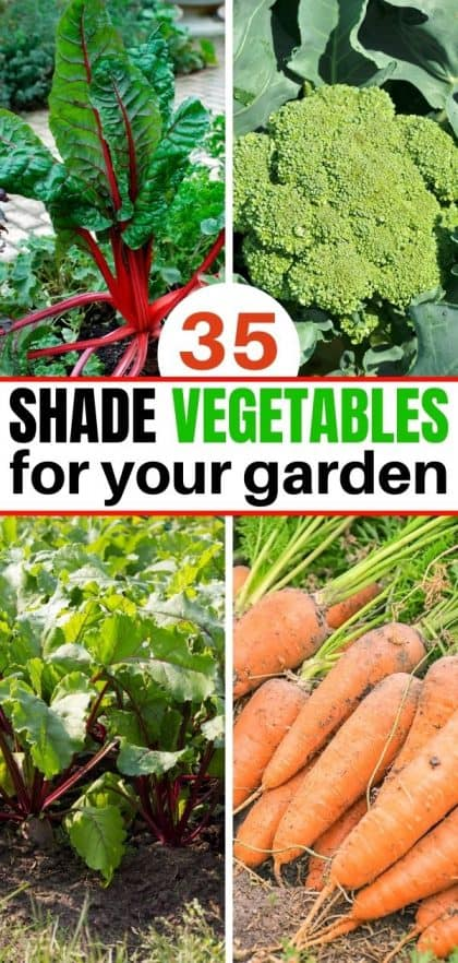 Pinterest collage for 35+ Partial Shade Vegetables post