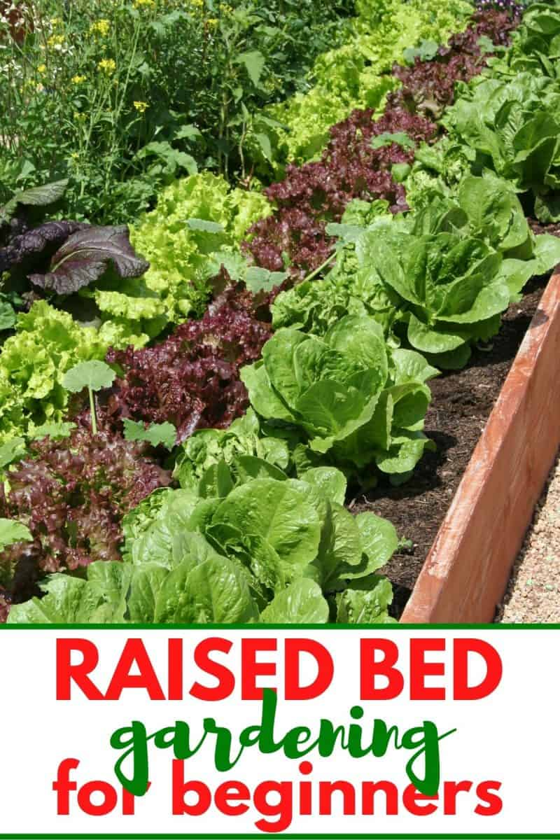 pinterest image of raised bed gardens for raised bed gardening for beginners post