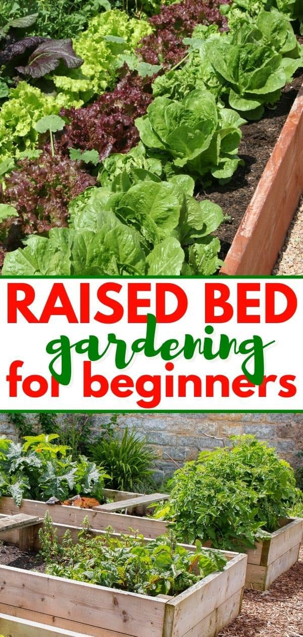 pinterest collage of raised bed gardens for post about raised bed gardening for beginners