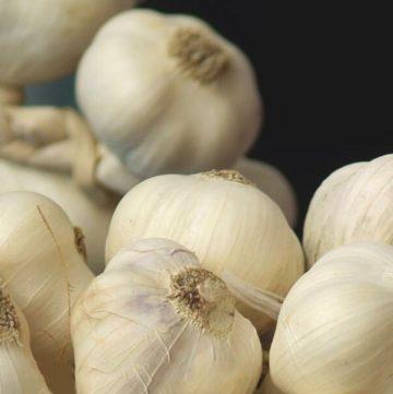 close up shot of garlic