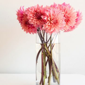a vase of dahlia flowers