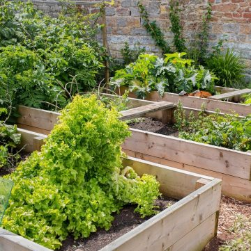 several raised beds used in gardening