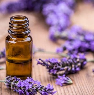 bottle of essential oil and some lavender